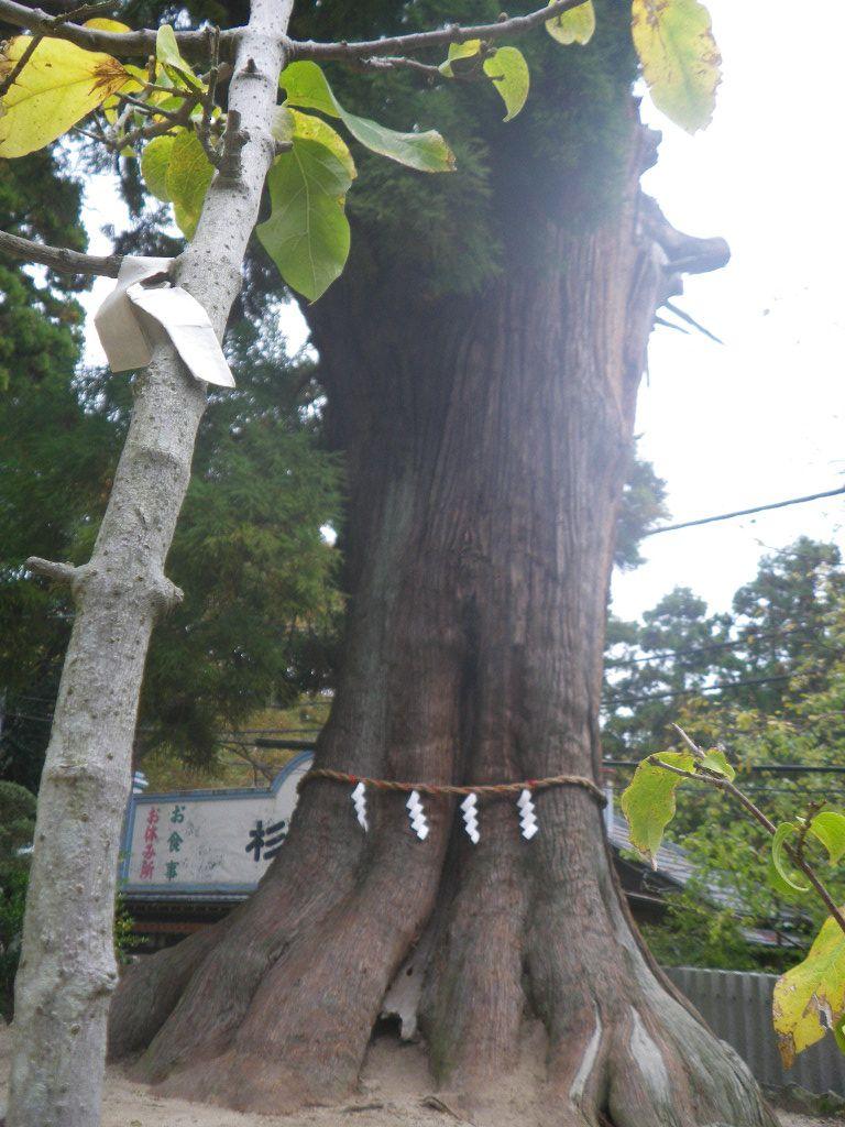 パワースポットその2 大杉