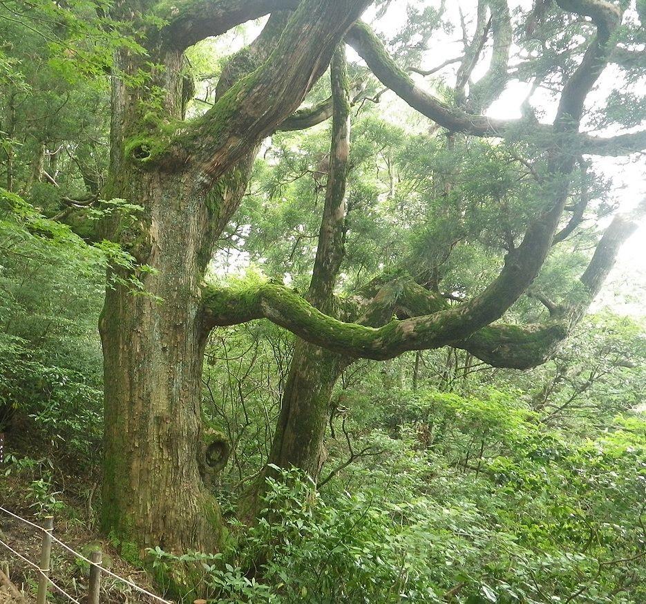 パワースポットその3 〜男女川の源流と紫峰杉〜