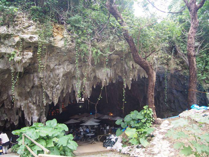 沖縄の自然や動物を満喫しよう!