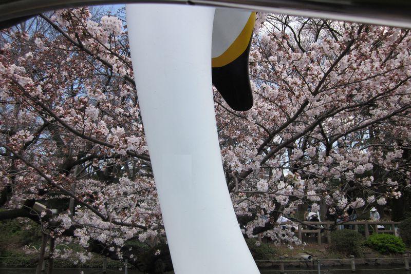 """""""スワンでお花見""""日本さくら名所100選の一つ「井の頭恩賜公園」"""