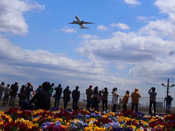 飛行機撮影をするならまずはココ「成田市さくらの山」