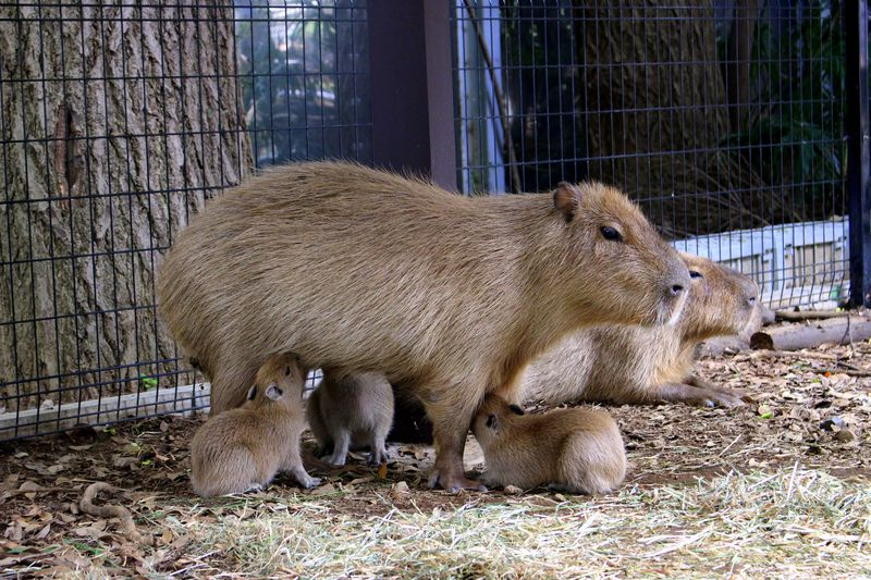 入場無料♪カピバラの赤ちゃんにキュン!「大宮公園小動物園」