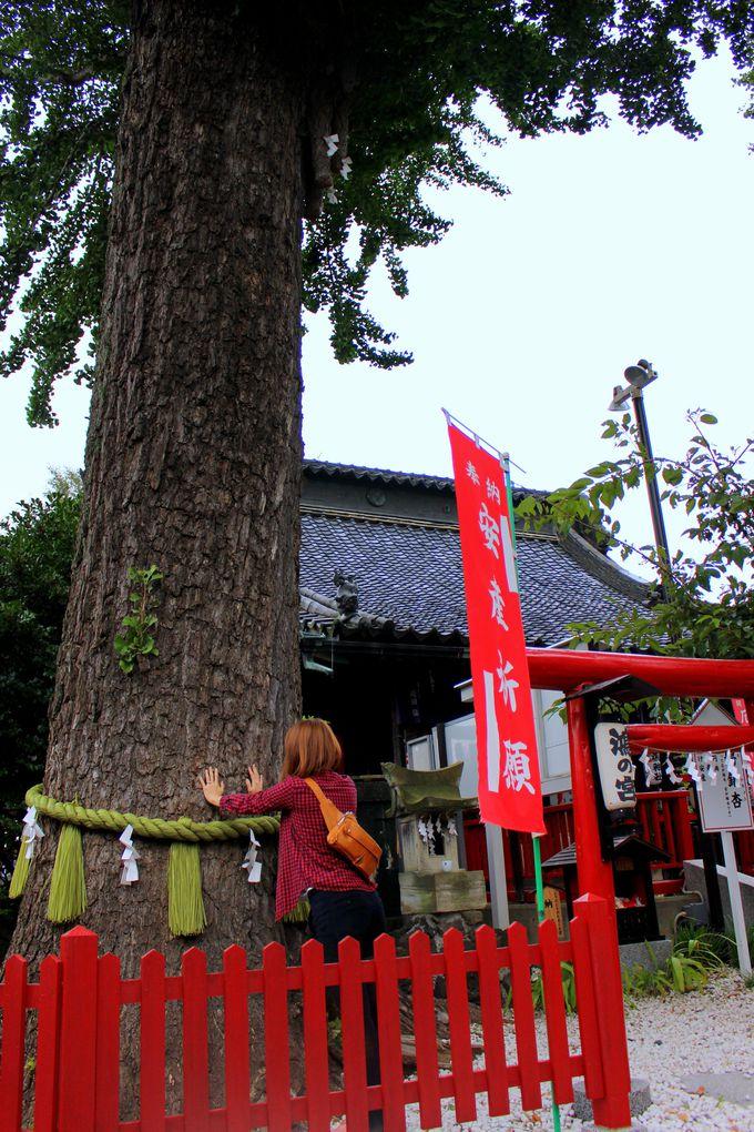 夫婦銀杏(めおといちょう)の木にタッチ!