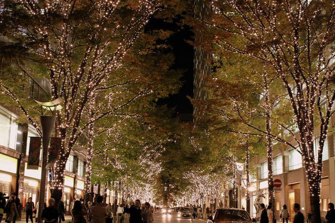 2015年2月15日まで開催!煌めくシャンパンゴールドの並木道