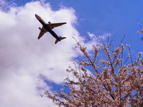 千葉のおすすめ桜スポット10選 飛行機や列車とのコラボレーションも!