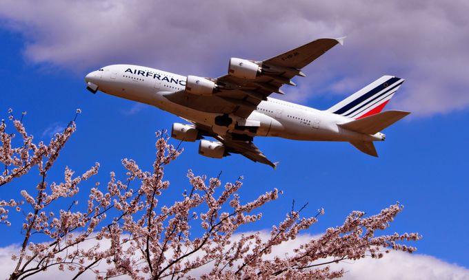 撮影必須!美しい飛行機と桜のコラボレーション!