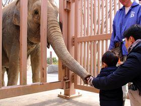 迫力満点!ゾウやキリンのエサやり体験!日立「かみね動物園」は動物が近くて超楽しい!