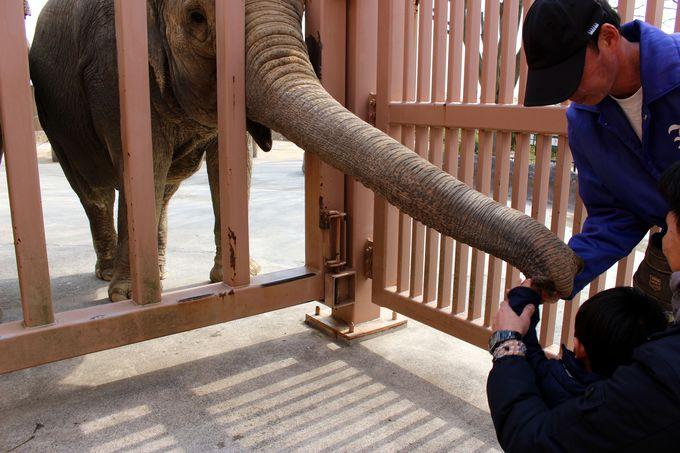 もっとゾウを近くで見たい方は動物園へ!