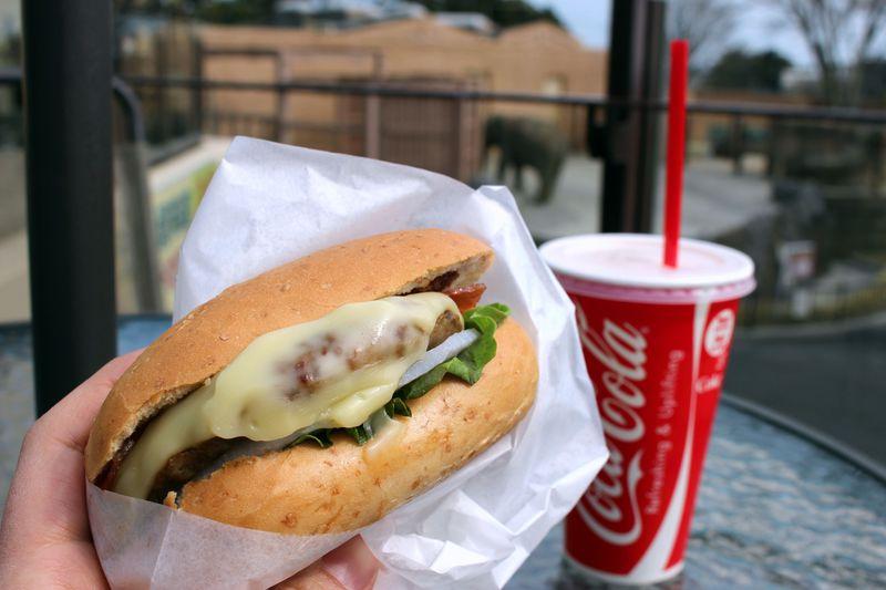 常陸牛バーガーが絶品!茨城・日立「エレファントカフェ」はゾウと太平洋が望めるカフェ