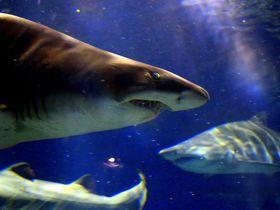 日本トップクラス規模「アクアワールド茨城県大洗水族館」が人気の6つの理由