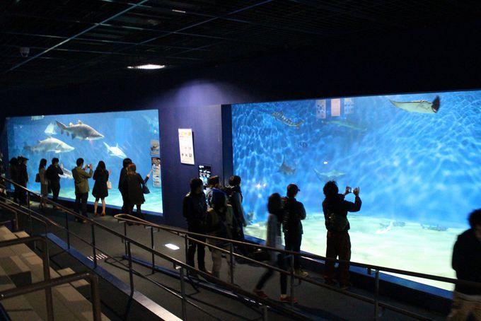 迫力満点!サメの海水槽&日本一のマンボウ水槽
