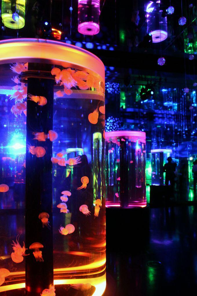 クラゲの幻想的な世界は鳥肌モノ!1階「グランドフロア」の魅力