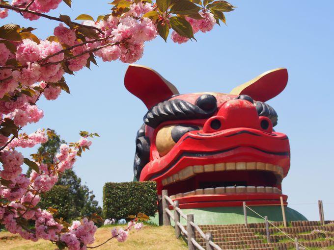 日本一大きな獅子頭×桜!
