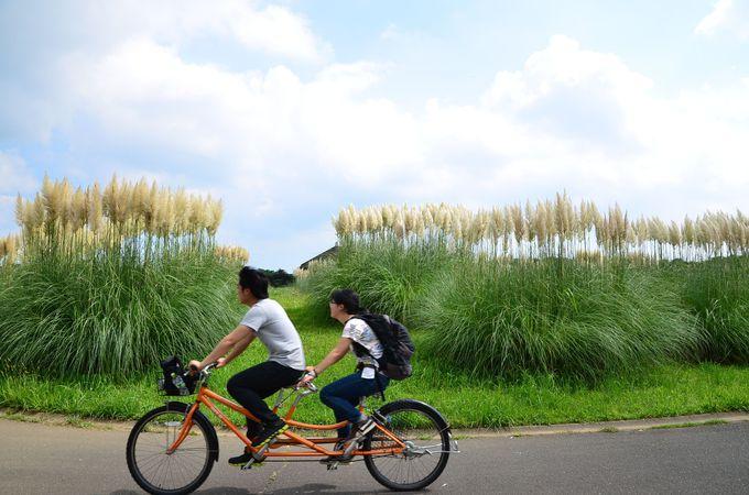 風をきって秋を感じる!「パンパスグラス×サイクリング」