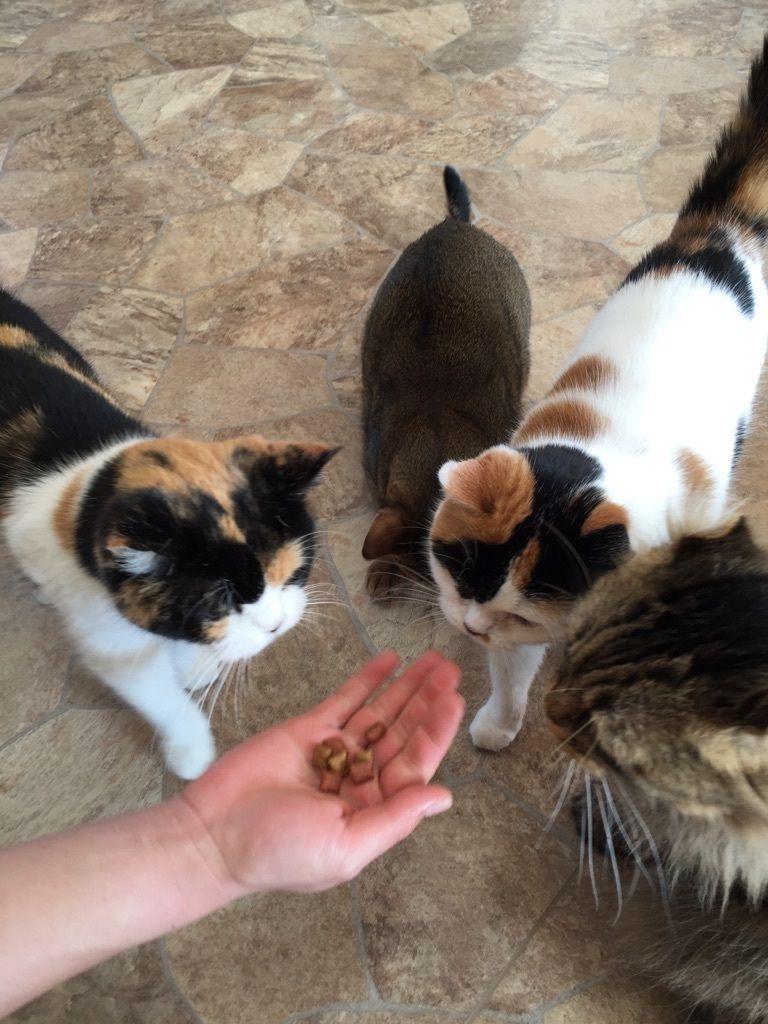 <楽しみ方その3>猫の人気者になろう!おやつタイム!