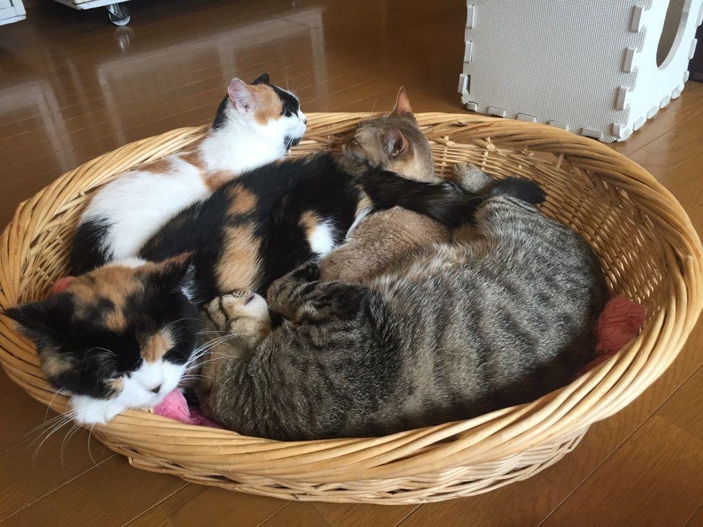 <楽しみ方その1>インスタ映えも!いろんな猫ちゃんを眺めて、撮って楽しむ!
