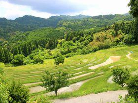 日本のウブドで心をリセット。千葉「大山千枚田」で感動の夏を味わう