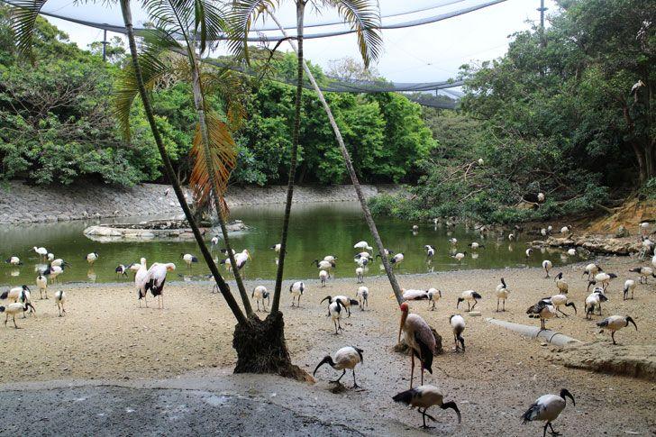 南国感溢れる植物園を満喫!動物ともふれあおう!