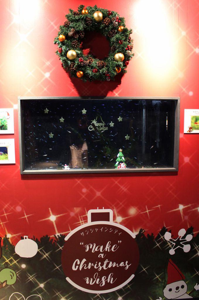 「クリスマス装飾×生き物」を楽しもう!