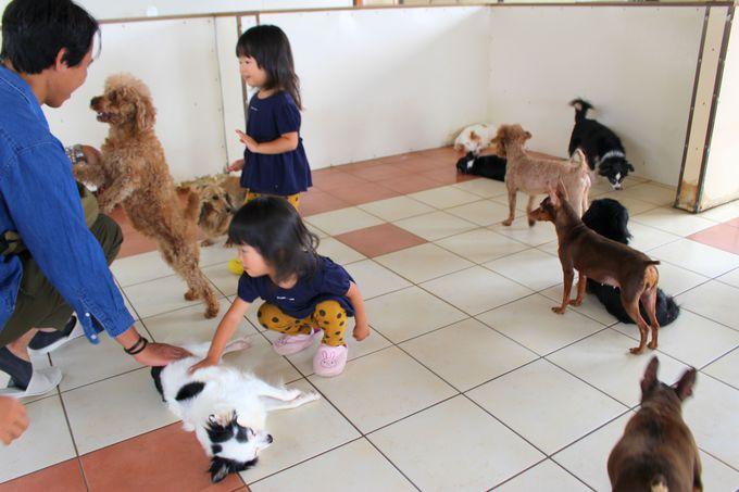 ワンちゃんねこちゃんと遊べる「犬猫ランド」