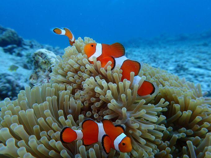 サンゴ礁がいっぱい!カラフルな魚も!