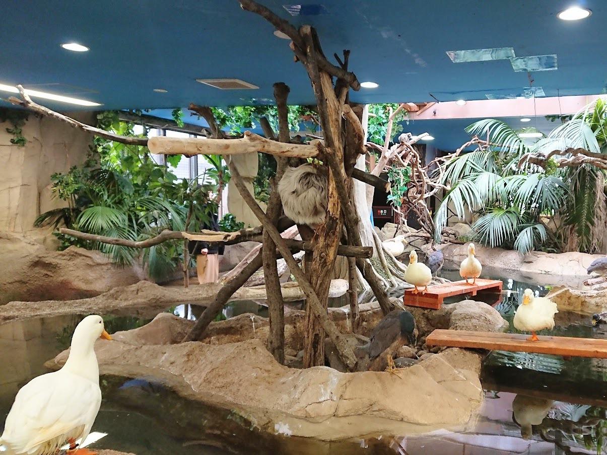「熱帯の森」&「保全の森」もかわいい動物のオンパレード!