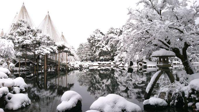 「徽軫(ことじ)灯篭」と「雪吊り」