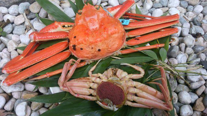 青(水色)タグ付きのズワイガニ、石川県では「加能がに」