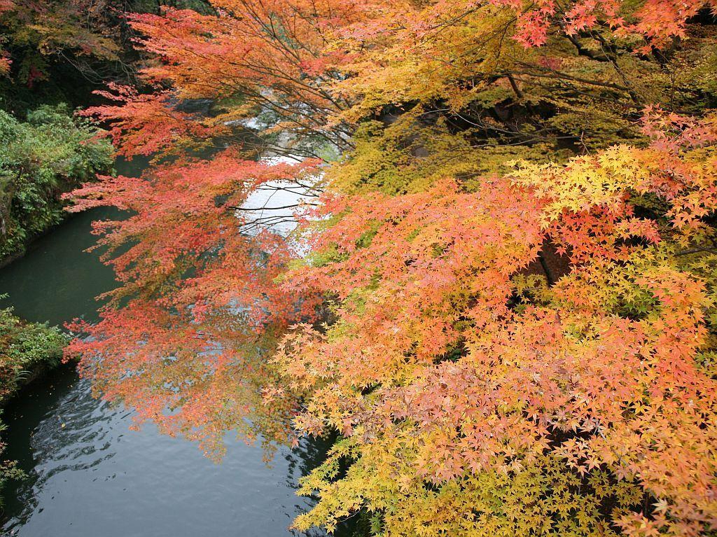 紅葉の季節は絶景!