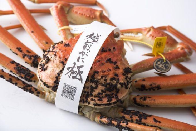 6.福井へ「越前ガニ」を食べつくす!