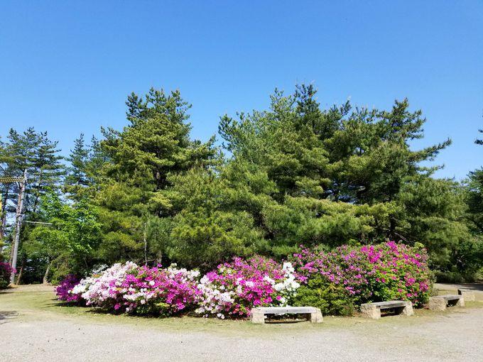 「卯辰山公園」の開園は大正3年!