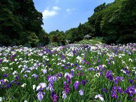 金沢市民の憩いの場「卯辰山公園」で花菖蒲やあじさいを満喫