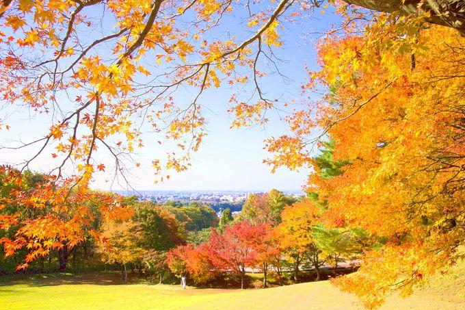 「卯辰山公園」の紅葉