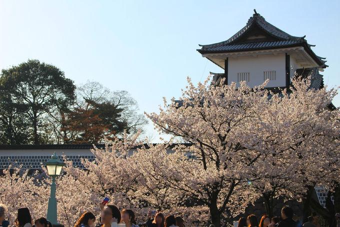 金沢城公園の桜を満喫