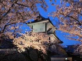 古都に咲き誇る桜!金沢城・兼六園観桜期のライトアップ&散策