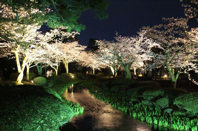 兼六園の桜の優しいライトアップ