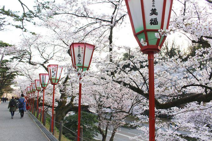 兼六園の豊富な種類の桜