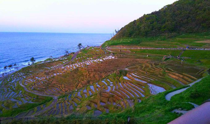 のどかな白米千枚田の風景