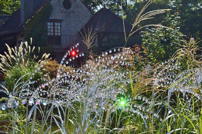 合わせて立ち寄りたい、箱根の秋の名所