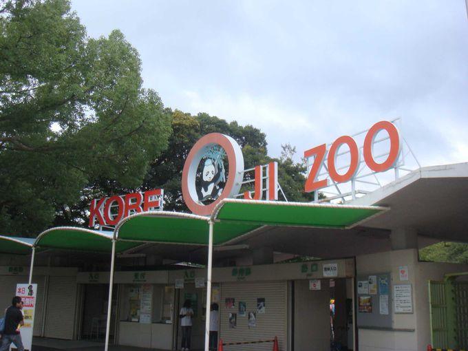 王子動物園に行ってみよう