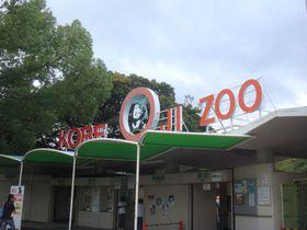 パンダに会える王子動物園♪子連れでの神戸観光なら、特におすすめです!