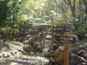 映画「ノルウェイの森」ロケ地。峰山高原リラクシアの森をハイキング