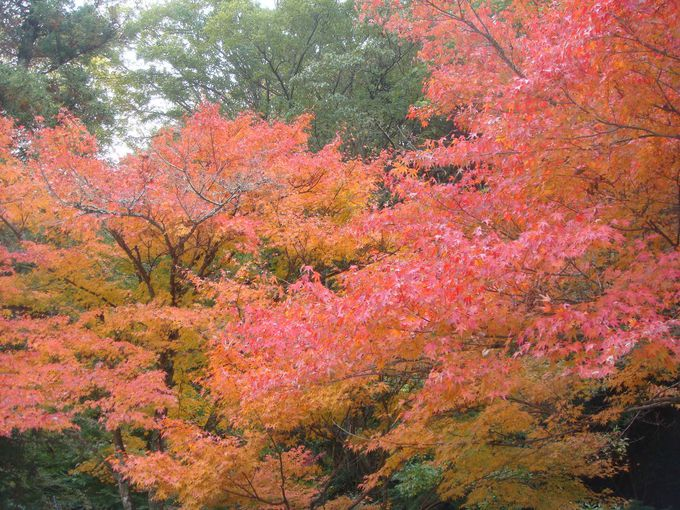 秋は紅葉、夏は蛍、春はしだれ桜