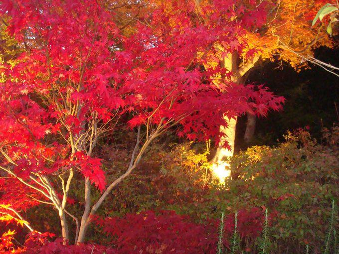 ライトアップされる、鮮やかな紅の色