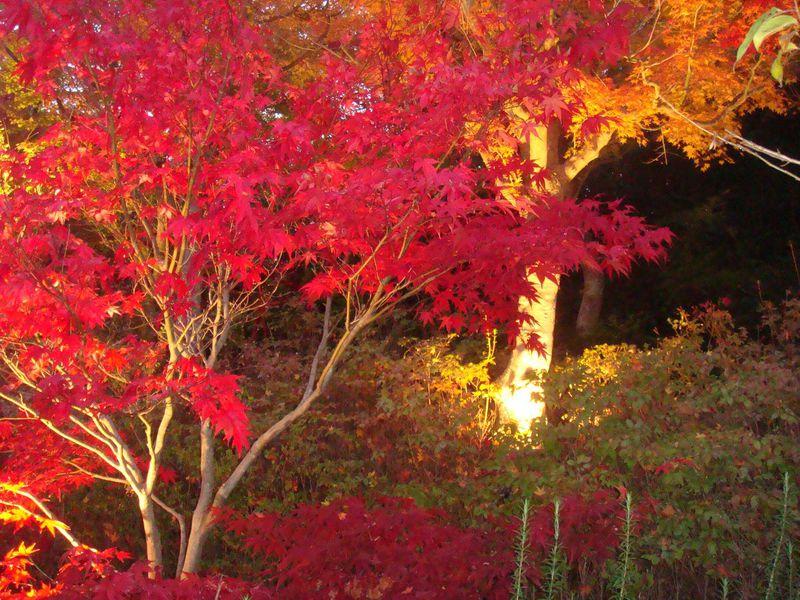 http://img-cdn.guide.travel.co.jp/article/16/20121120221426/4659001614D9466383906D3FCA7B838C_LL.jpg