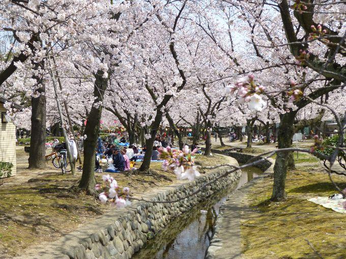 お花見スポット、西武庫公園&武庫川河川敷