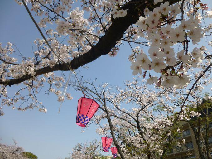 せっかく訪れるなら、「桜祭り」の期間に。