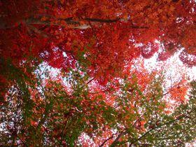 有馬温泉街、随一の紅葉スポット!秋の瑞宝寺公園を歩く。