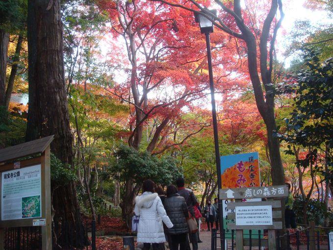 8.瑞宝寺公園