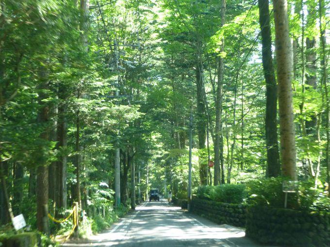緑のアプローチ「万平通り」を抜けて万平ホテルへ向かう。